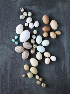 Minneapolis photographer and blogger Mary Jo Hoffman shows an intriguing grouping pf chicken eggs, duck eggs, goose eggs, pheasant eggs, quail eggs, robin eggs and cardinal eggs. More ideas for nature projects: