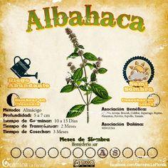 Eco Garden, Garden Deco, Edible Garden, Organic Gardening, Gardening Tips, Beautiful Gardens, Amazing Gardens, Medicinal Herbs, Small Trees