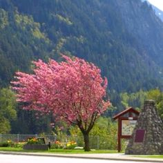Funky Tree Near Hope BC