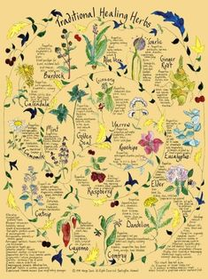 Traditional Healing Herbs Poster, the illustrator is Margo Davis