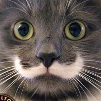 Hamilton the Hipster Cat :)