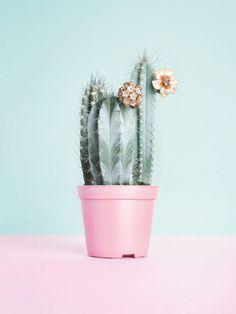 Cactus in interieur