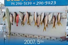 Plenty less fish in the sea: Dramatic pictures show how ocean life is dying