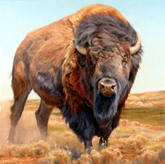 My moms spirit! Actually the great white buffalo. Wildlife Paintings, Wildlife Art, Animal Paintings, Animal Drawings, American Bison, American Animals, Native American Art, Buffalo Animal, Buffalo Art