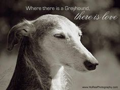 Where there is a Greyhound...