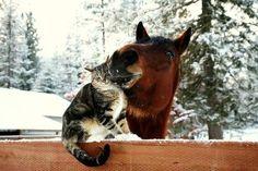 Giddyup loves his kitten <3