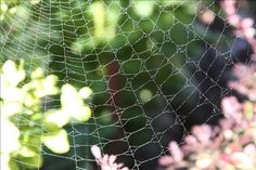 Such a delicate and beautiful web!