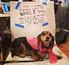 Weenie Hall of Shame // 23 Reasons Why Dachshunds Are The Undisputed Champions of Dogshaming