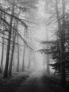 """""""I went to the woods because I wished to live deliberately, to front only the essential facts of life, and see if I could not learn what it had to teach, and not, when I came to die, discover that I had not lived."""" - Henry David Thoreau"""