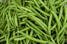 Green Beans | What to Plant for a Successful Fall Harvest