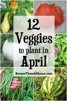 these 12 vegetables in April for an amazing harvest this summer. Plant these 12 vegetables in April for an amazing harvest this summer.Plant these 12 vegetables in April for an amazing harvest this summer. Planting Vegetables, Growing Vegetables, Fruits And Veggies, Fresh Vegetables, When To Plant Vegetables, Container Gardening Vegetables, Growing Plants, Gardening For Beginners, Gardening Tips