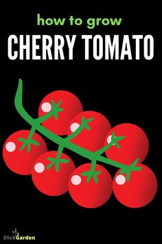 How to grow cherry tomatoes? Homegrown cherry tomatoes taste great. Most people have no growing area at their home but they are interested in growing plants. Those who do not have space to plant should not be discouraged. Growing Cherry Tomatoes, Grow Tomatoes, How To Grow Cherries, Starting A Vegetable Garden, Grow Your Own Food, Growing Plants, Space, People, Floor Space