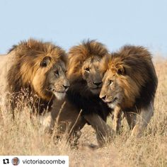 """798 Likes, 14 Comments - AFRICANature (@africa_nature) on Instagram: """"Brothers. Photo by @victoriacoombe ________________ Make sure you follow this photographer on…"""""""