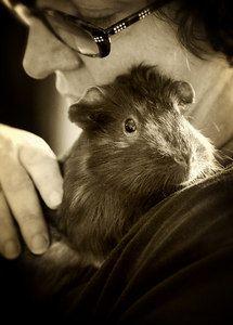 guinea pig love | photo by Ondago Arts