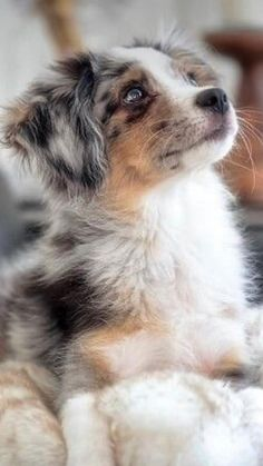 Super Cute Puppies, Cute Baby Dogs, Cute Dogs And Puppies, Doggies, Funny Puppies, Funny Dogs, Puppies Puppies, Adorable Dogs, Cutest Pets