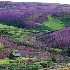 Purple hills at the Scottish Border IG/debbytenquist