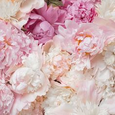 Ahhhh... the perfect Monday pick-up. #peonies . Phot