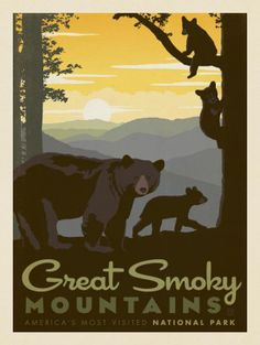 Great Smoky Mountains National Park: Mama Bear & Cubs