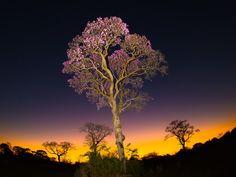 entardecer Pantanal (Foto: Ernane Junior/ VC no TG)