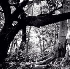 Dicen que cuando uno esta triste debe abrazar un árbol fuertemente y contarle tu tristeza. El árbol de la izquierda es el que yo abrazo.