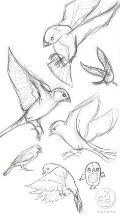 ::: Sketchy Sunday ::: birds | artsy ants