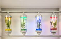 Plants grown in test tubes @creativework247