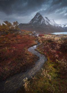 Арктический ковер. Гренландия ©️ Даниил Коржонов