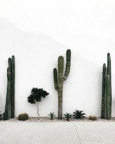 Indoor Cactus Plants, Green Plants, Green Cactus, Interior Plants, Interior Garden, Interior Design, Backyard Landscaping, Dessert Landscaping, Modern Gardens
