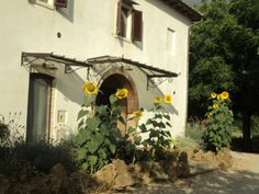 Agriturismo in Tuscany, near to San Gimignano: Polveraia