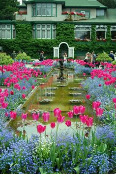 Blooming Butchart Gardens, Victoria