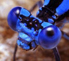 Ojos de insectos - Taringa!