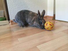 Kaninchen Leckerli - Ball