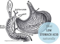 Low stomach acid causes a cascade of digestive issues like bloating, hair loss and constipation. Learn how to heal low stomach acid naturally!