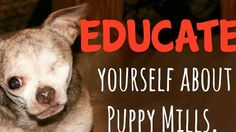 Petition · Outlaw all puppymills in oklahoma · Change.org
