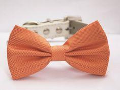 Orange Dog Bow Tie  Orange Wedding Dog Collar Chic by LADogStore, $29.99