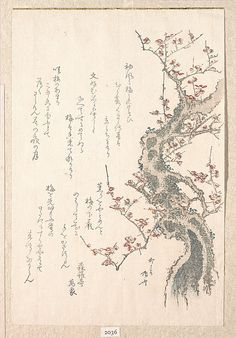 Ryūryūkyo Shinsai, (Japanese, active ca.1799–1823). Spring Rain Collection (Harusame shū), vol. 1: Plum Tree in Bloom, ca. 1805-10. The Metropolitan Museum of Art, New York. H. O. Havemeyer Collection, Bequest of Mrs. H. O. Havemeyer, 1929 (JP2036)   The blossoming of the plum tree was a harbinger of spring, the beginning of the New Year in the lunar calendar. #spring