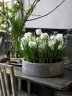 grasses & white tulips
