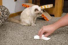 Как избавиться от меток кота видео