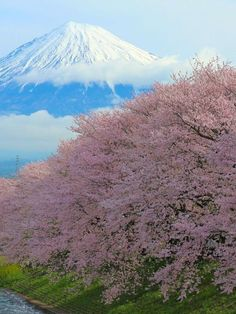 Ryugenbuchi, Mt.Fuji and Cherry blossoms, Fuji, Shizuoka, Japan, 龍厳淵, 富士山, 富士市, 静岡, 日本 Japan Travel Tips, Asia Travel, What A Wonderful World, Beautiful World, Shizuoka, Mount Fuji, Beautiful Places To Visit, Amazing Nature, Great Artists