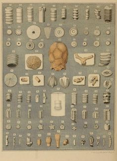 A Pictorial Atlas of Fossil Remains. A Pictorial Atlas of Fossil Remains. How To Polish Rocks, Crinoid Fossil, Native American Tools, Fossil Hunting, Engraving Illustration, Indian Artifacts, Technical Drawing, Rocks And Minerals, Sacred Geometry