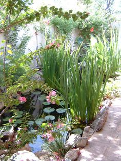 A tiny backyard in the middle of an old neighborhood is completely transformed with the addition of a waterfall, stream & Koi pond!