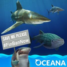 Us sharks need your help: sign in to the @Oceana petition to ban the trade of shark fins in the US. #FinBanNow #SharkApproved