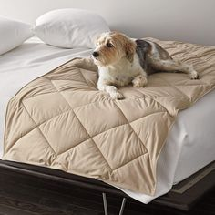 PrimaLoft® Deluxe Dog Bed Protector at The Company Store - Pets - Pet Gifts - Bedding - Twin