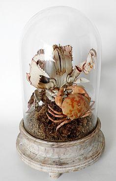 Rare Marine Specimen: The Spanner Crab Ranina Ranina and the Crab Brachyura $2,000