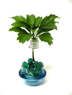 Recycle Your Blown-Out Light Bulbs! The Hardware Way! Recycled Light Bulbs, Light Bulb Crafts, Light Bulb Vase, Old Lights, I Saw The Light, Bulb Flowers, Do It Yourself Projects, Recycled Crafts, Terrarium