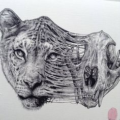 Paul Jackson, a British artist based in Toronto, creates stunningly detailed and dark pen-and-pencil drawings of various animals with their skeletons and sometimes organs lifting out of their bodies.