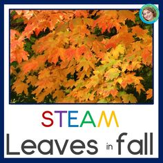 Add hands on science, art, reading, writing and math activities to your fall learning with Leaves in Fall STEAM.  Your primary grade students will love reading about leaves with the reproducible booklet, and then exploring hands on activities to deepen their knowledge.  Perfect for fall / autumn themes, this resource will engage your preschool, kindergarten or first grade children in leafy science learning while working fine motor and visual observation skills.  Check it out today! TpT$ Steam Activities, Hands On Activities, Science Activities, Science Lessons, Science Art, Life Science, Symmetry Activities, Leaf Images, Hands On Learning