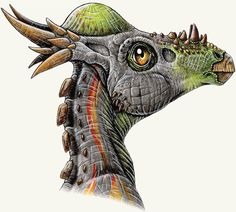 Stygimoloch: Late Maastrichtian (66 Ma): Cerapoda - Pachycephalosauridae: Discovered by Galton & Sues, 1983: Artist unknown
