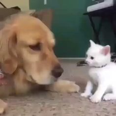 this kittah has THUMBS Cute Funny Animals, Cute Baby Animals, Cute Cats, Funny Cats, Animals And Pets, Funny Animal Videos, I Love Cats, Cutest Dogs, Kittens Cutest