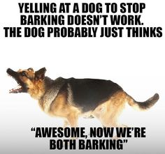 Wicked Training Your German Shepherd Dog Ideas. Mind Blowing Training Your German Shepherd Dog Ideas. Dog Commands Training, Dog Training Tips, Brain Training, Love Quotes Funny, Dog Quotes, Schaefer, Dog Barking, German Shepherd Puppies, Funny German Shepherds